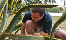 Albion College student observing a plant specimen