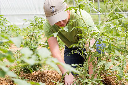 Albion College student working on the student farm.